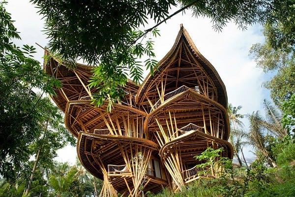 چوب بامبو