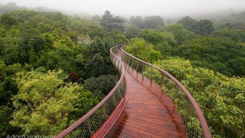 پیاده روی بر فراز درختان | پیاده روی در طبیعت