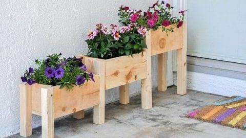 قدمهای نخست برای داشتن یک باغ خانگی