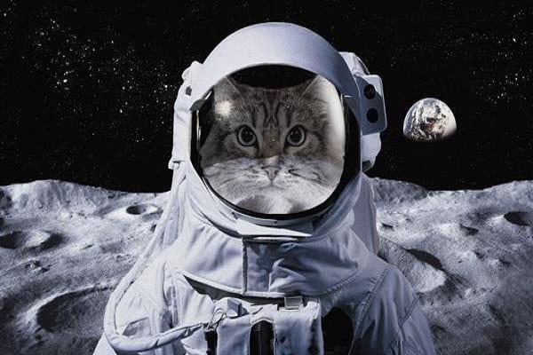 کلانتر و گربه ی فضایی مرموز