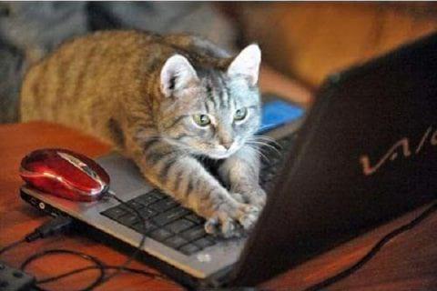 گربه های معتاد به فضای مجازی