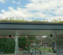 ایستگاه اتوبوس با سقف سبز | ایستگاه های اتوبوس در هلند