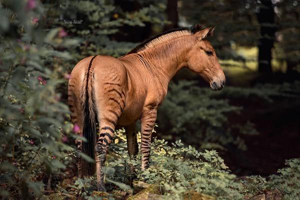 عکاسی از حیوانات