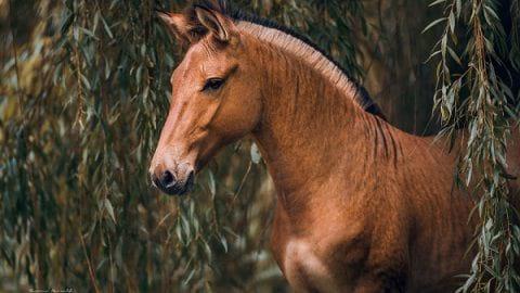 عکاسی از حیوانی نادر و ترکیبی | عکاسی از حیوانات