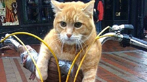روزنوشته های کلانتر پفک؛ دوچرخه گربه ای