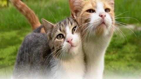یه لقمه محیط زیست؛ روز جهانی گربه
