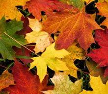 یه لقمه محیط زیست؛ فصل ها چگونه تغییر می کنند؟
