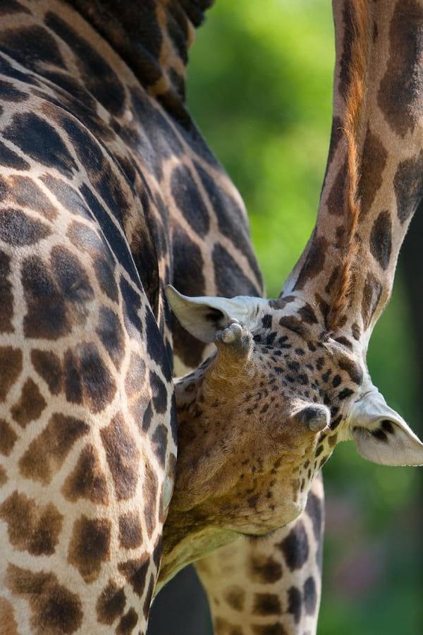عکاسی حیوانات