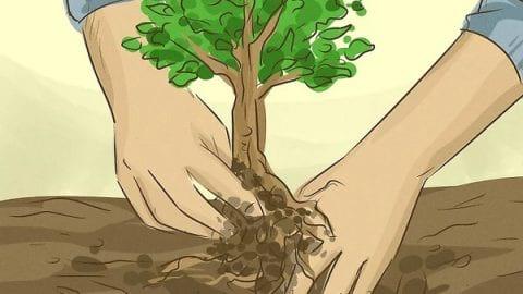 چگونه از درختان محفاظت کنیم؟ (۱)   حفظ درخت ها
