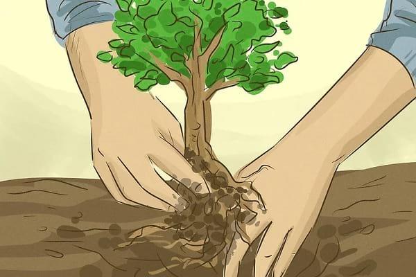 حفظ درخت ها