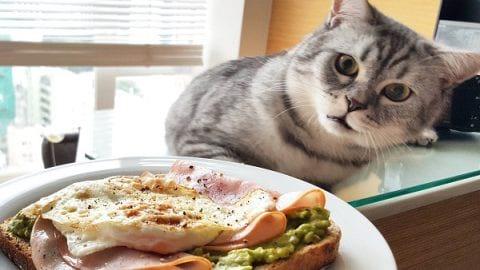 روزنوشته های کلانتر پفک؛ صبحانه خوشمزه را فراموش نکنید