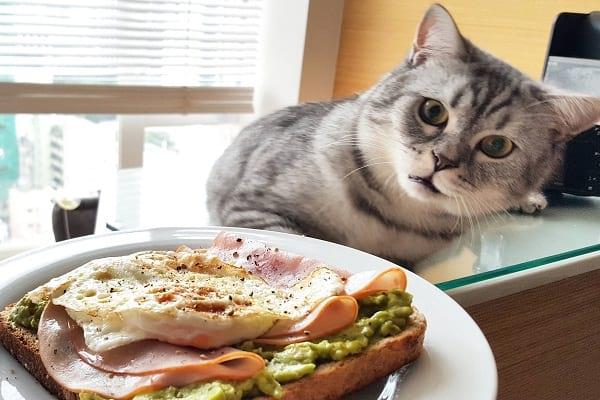 روزنوشته های کلانتر پفک | صبحانه خوشمزه را فراموش نکنید