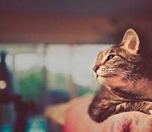 روزنوشته های کلانتر پفک؛ گربه های فضایی