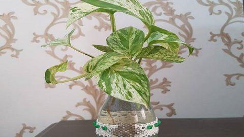 کاشت گل در بطری آب معدنی