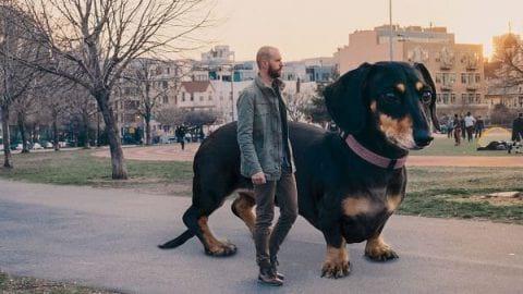 سگ غول پیکر در کتاب کودکان