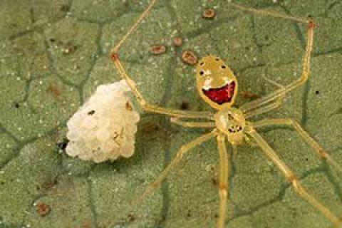 عنکبوت های شگفت انگیز