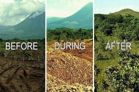 زباله هایی که به جنگل تبدیل شدند