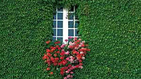 باغ عمودی بر دیوار ساختمان