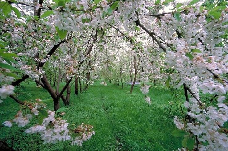 خِش خِش بهار