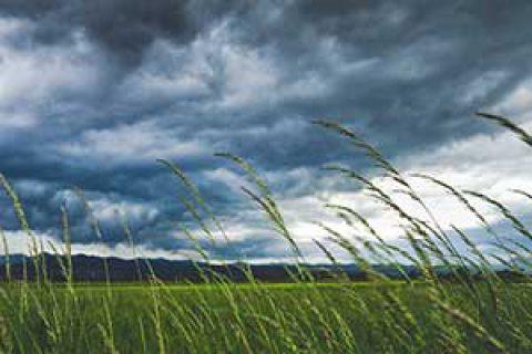معجزات قرآنی؛ بادهای حاصلخیزکننده