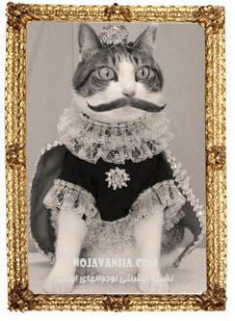 ببري خان، گربه ناصرالدين شاه