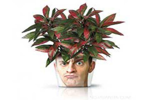 گلدان های مبتکرانه