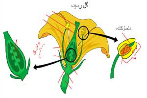 معجزات قرآنی؛ مادگی و نرینگی در گیاهان