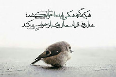 حیوان آزاری / مجموعه تلوزیونی روشنا