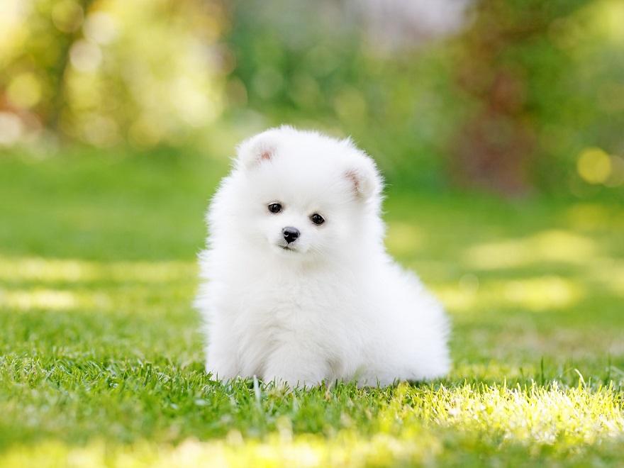 سگ دوست داشتنی و وفادار