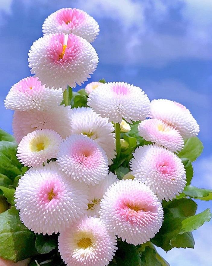 زیبایی چیست؟ تصویری از گل های سفید زیبا