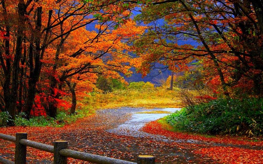 زیبایی چیست؟ تصویری از پاییز زیبا