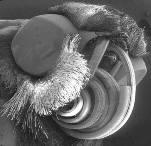 تصویری از میکروب های زیر ناخن