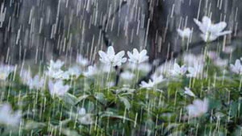 یه لقمه محیط زیست؛ بارندگی کم است یا کم نیست؟ مسئله، فصل است!