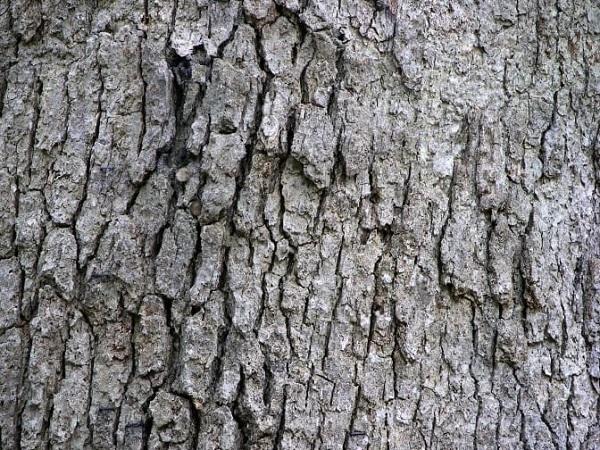 تصویری از اجزای درخت