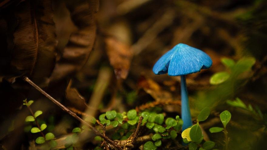 تاثیر رعد و برق بر رشد قارچ ها