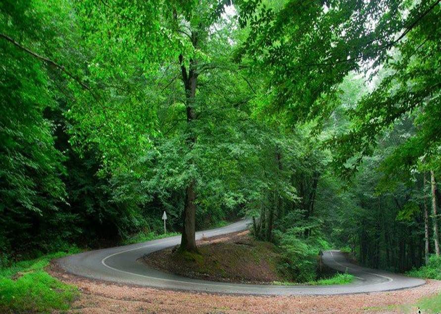 درختان برگ پهن