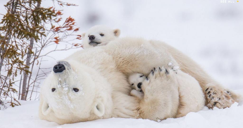 خواب زمستانی