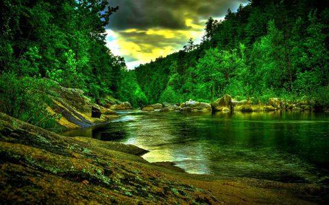 جنگل درختان برگ پهن مناطق معتدل