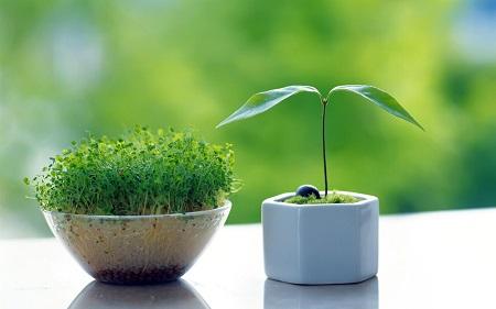 آموزش درست کردن سبزه عدس
