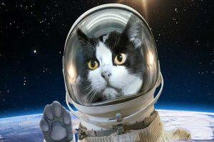 گربه فضایی